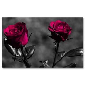 Αφίσα (μπλε, τριαντάφυλλα, μαύρο, λευκό, άσπρο)